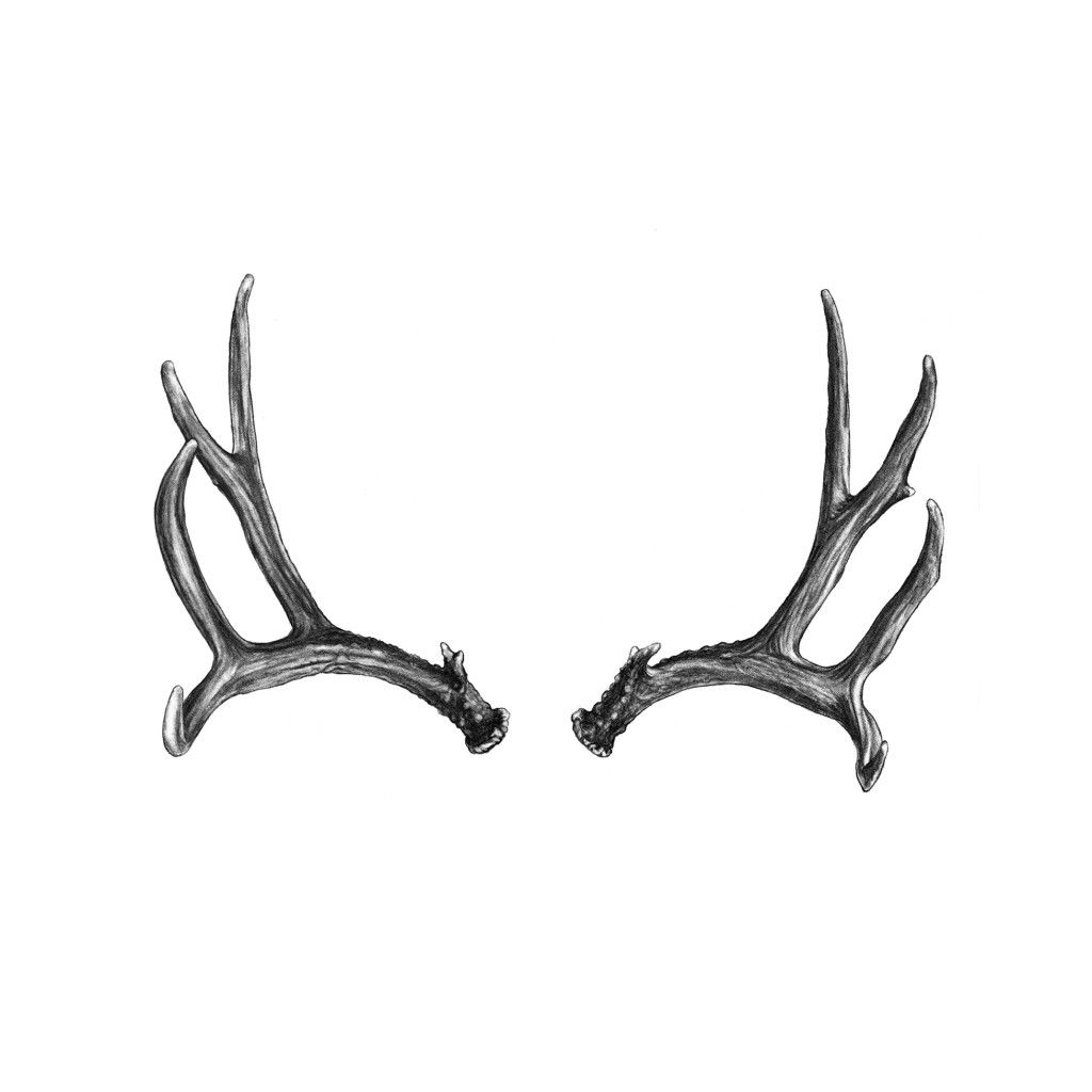 how to draw deer antlers how to draw antlers step by step draw antlers how to deer