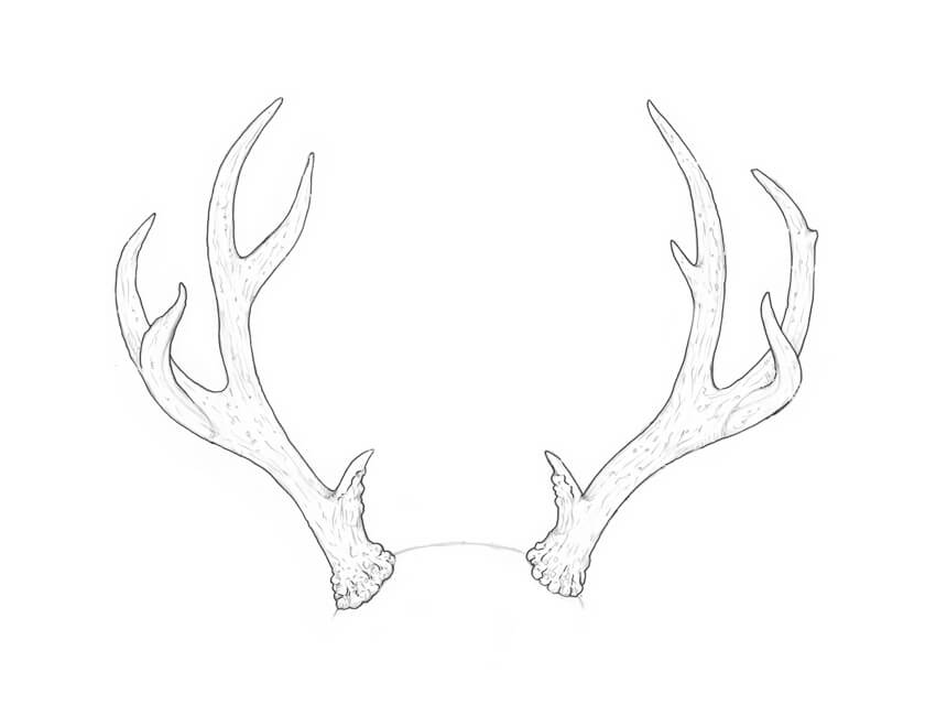 how to draw deer antlers how to draw antlers step by step how draw antlers deer to