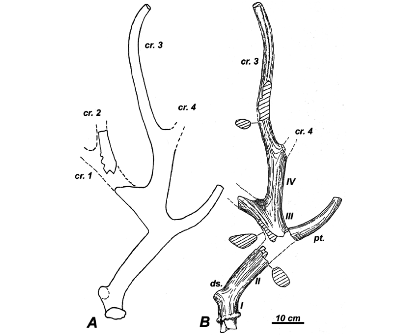 how to draw deer antlers how to draw deer antlers clipart best deer to antlers draw how