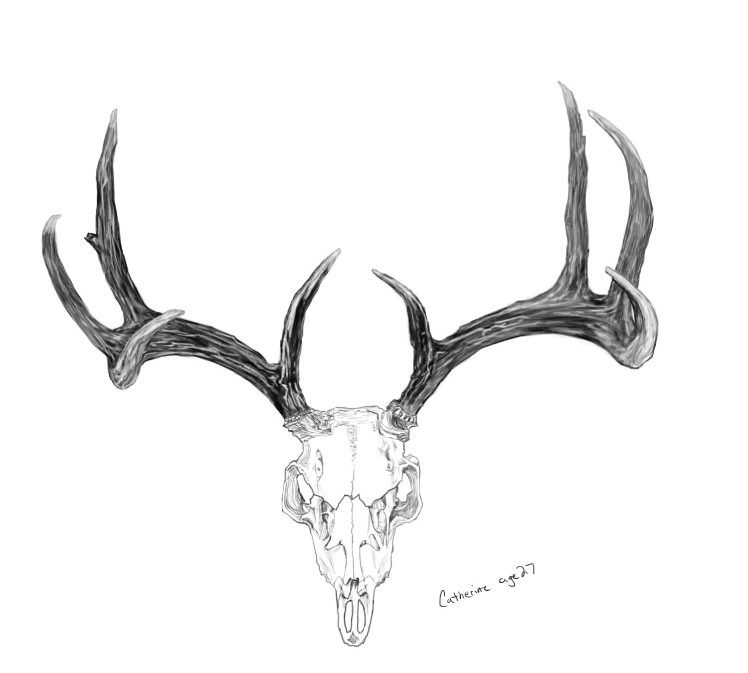 how to draw deer antlers intertwining antlers original print antler by to deer antlers draw how