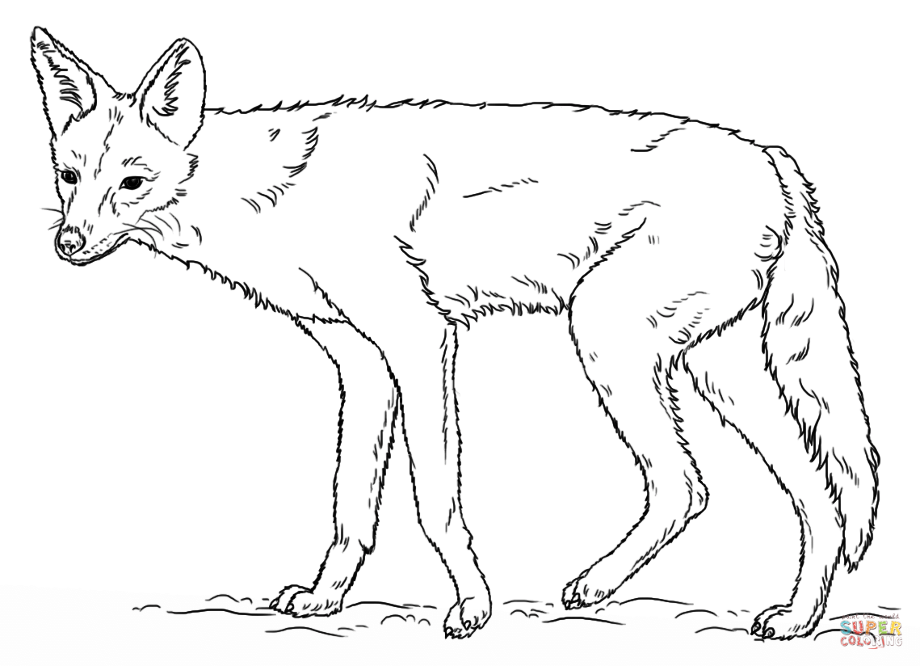 how to draw jackal golden jackal coloring page free printable coloring pages how draw to jackal