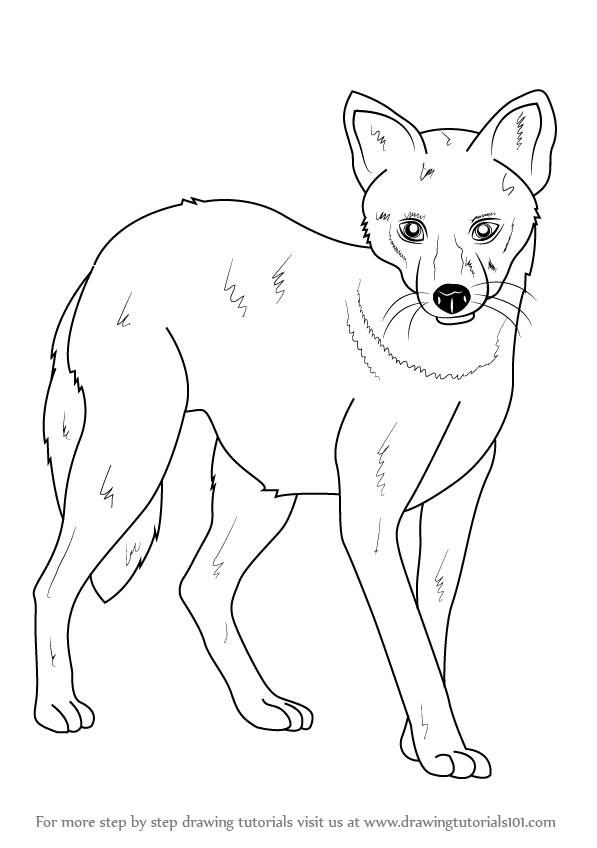 how to draw jackal how to draw a jackal how jackal to draw