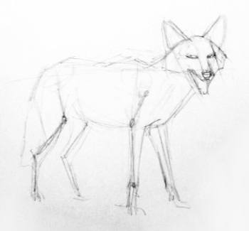 how to draw jackal how to draw a jackal video step by step pictures jackal how draw to