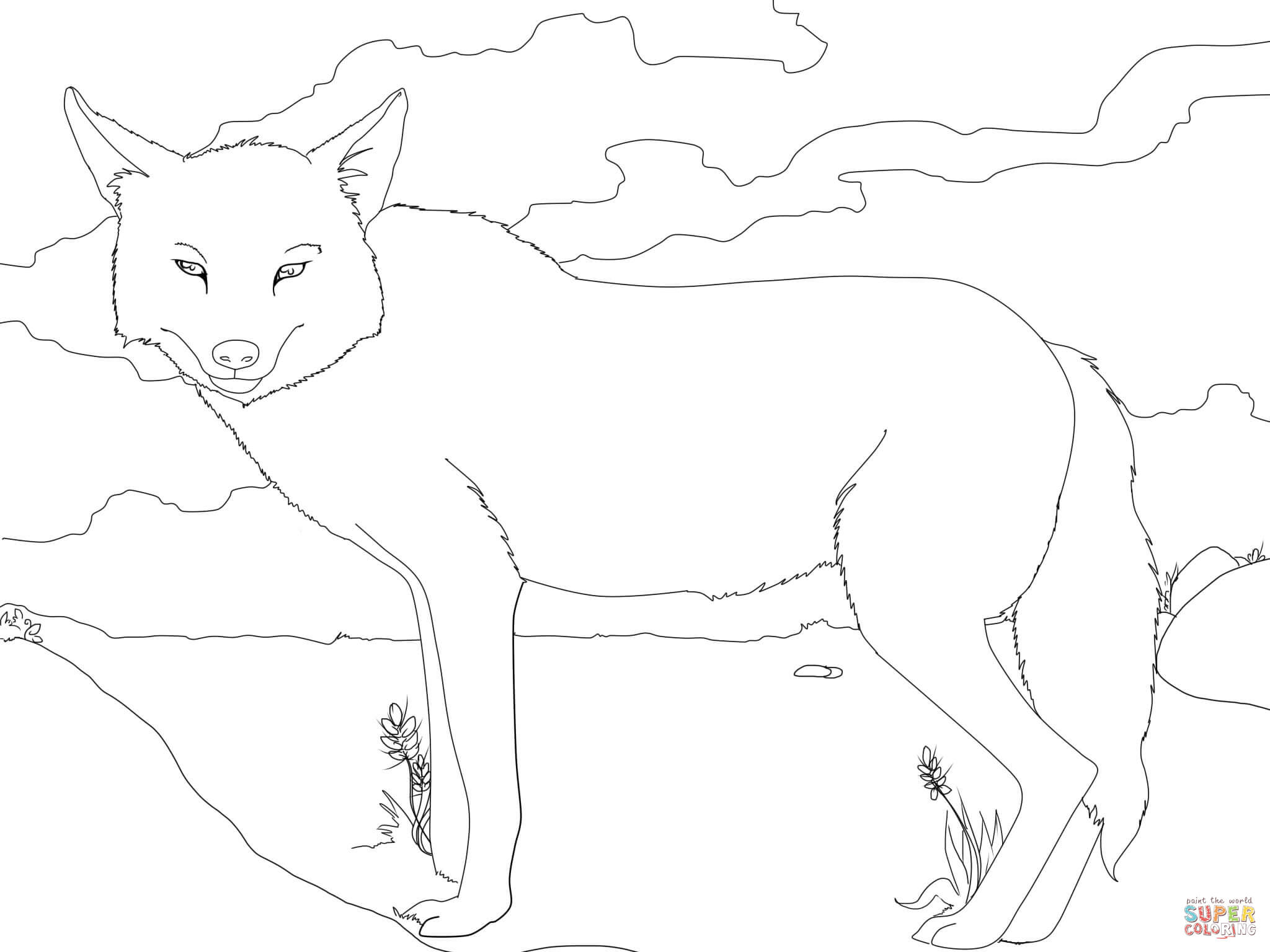 how to draw jackal jackal coloring page animals town animals color sheet draw jackal how to