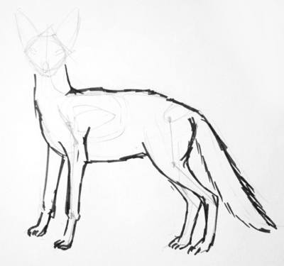 how to draw jackal jackal coloring page exploring nature educational resource jackal how draw to