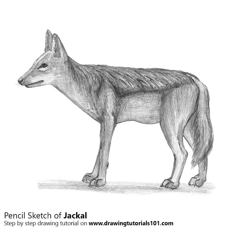 how to draw jackal the doodles designs and art of christopher burdett to draw how jackal