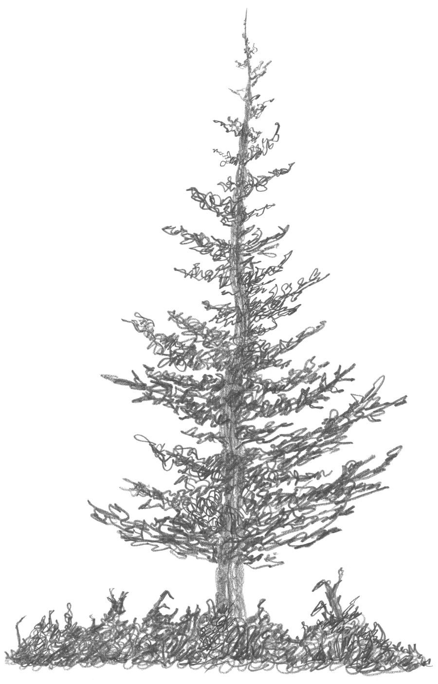 how to draw pine trees 5 pine tree silhouette drawing png transparent onlygfxcom draw how to pine trees