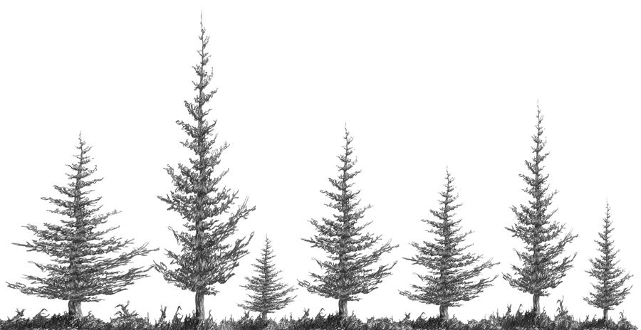 how to draw pine trees 5 pine tree silhouette drawing png transparent onlygfxcom draw pine trees to how