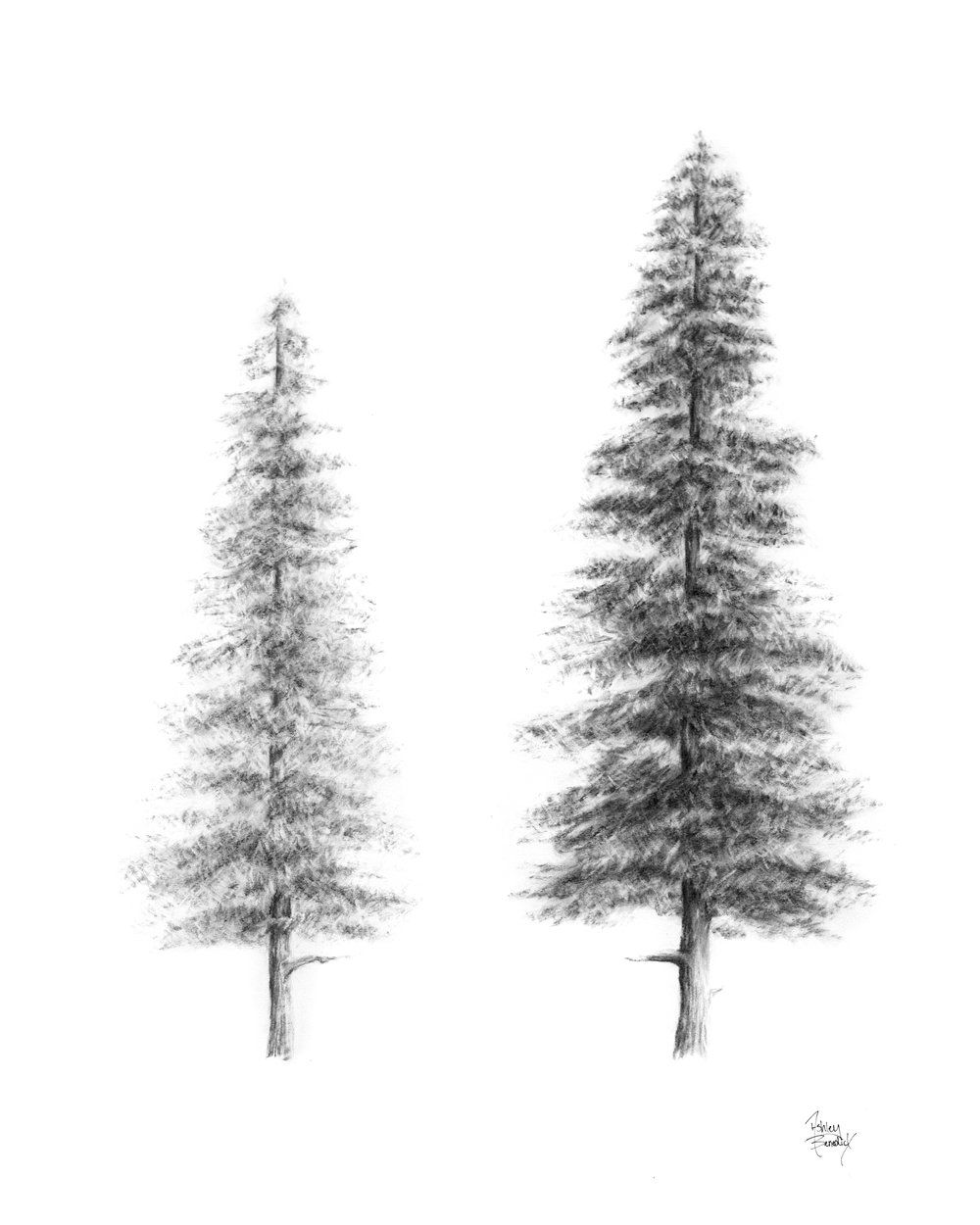 how to draw pine trees pin on for kelly louise to trees pine draw how