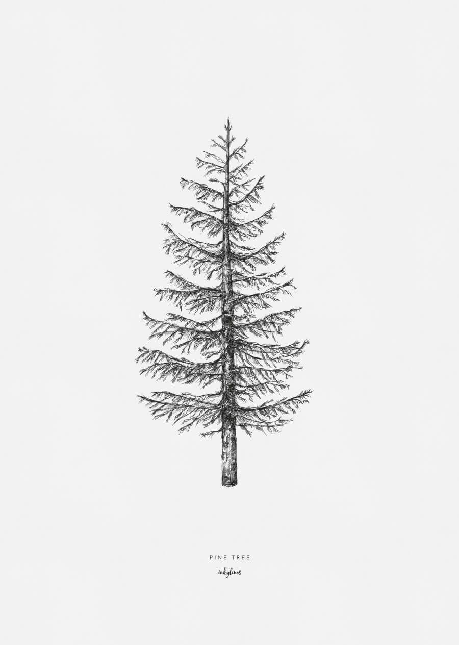 how to draw pine trees simple pine tree drawing at getdrawings free download how pine draw to trees