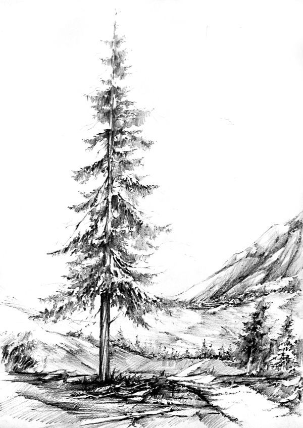 How to draw pine trees