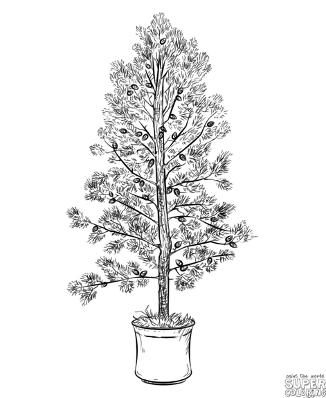 how to draw pine trees step by step drawn pine tree pencil drawing pencil and in color drawn how trees to by step draw step pine