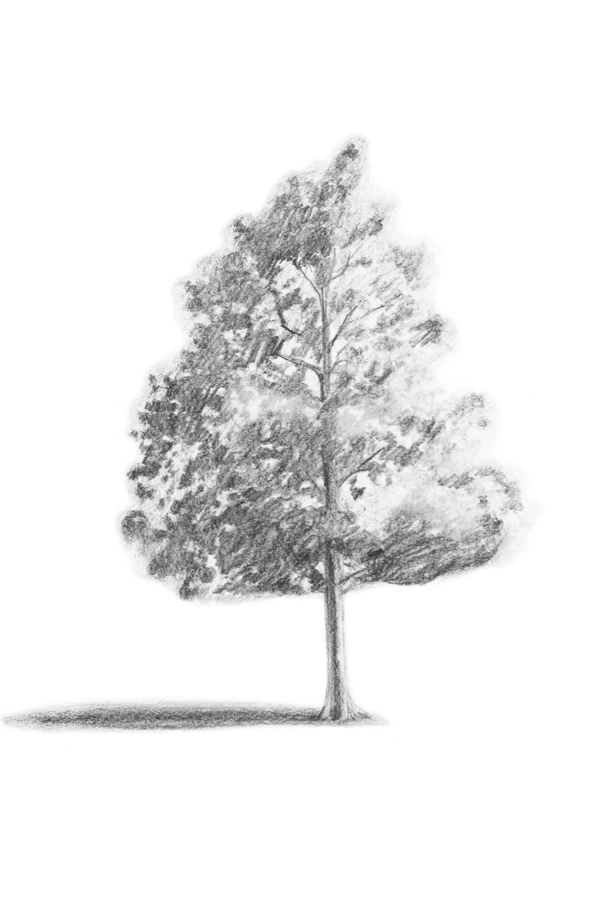 how to draw pine trees step by step easy pine tree drawing step by step trees step step by pine draw to how