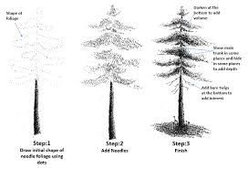 how to draw pine trees step by step how to draw a pine tree step by step easylinedrawing draw step to how by trees step pine