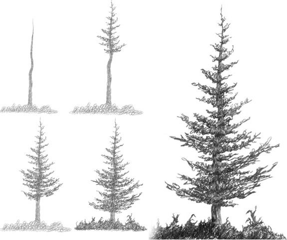 How to draw pine trees step by step
