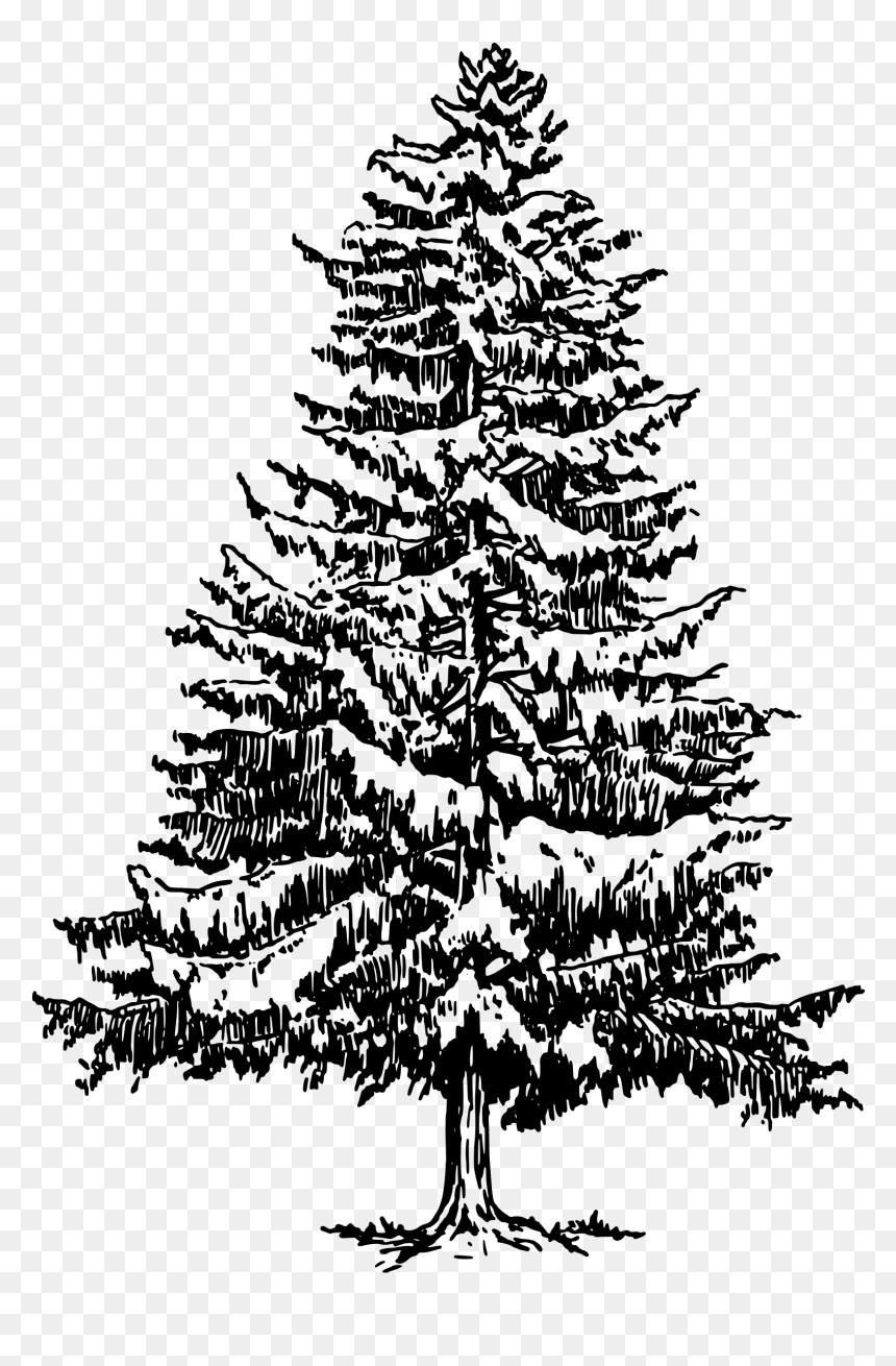 how to draw pine trees step by step how to draw a tree step by step image guides pine trees step how to step draw by