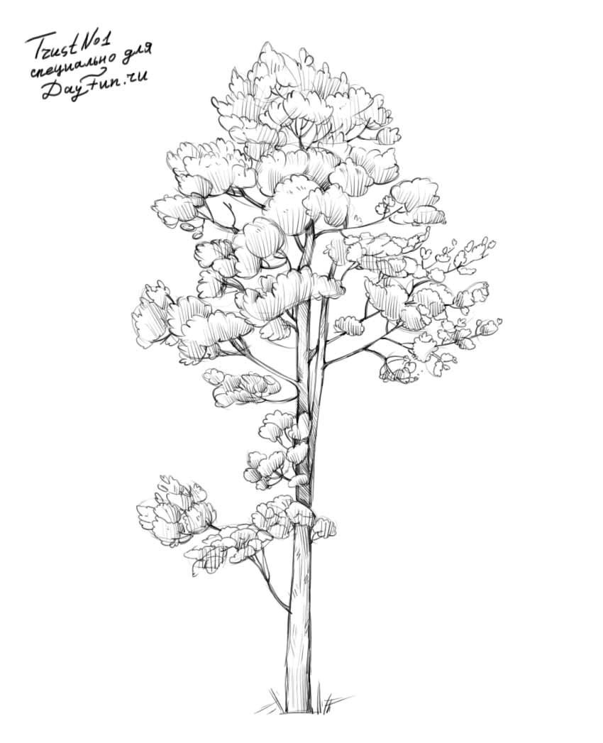 how to draw pine trees step by step how to draw realistic pine trees step by step arcmelcom by step how draw trees to pine step