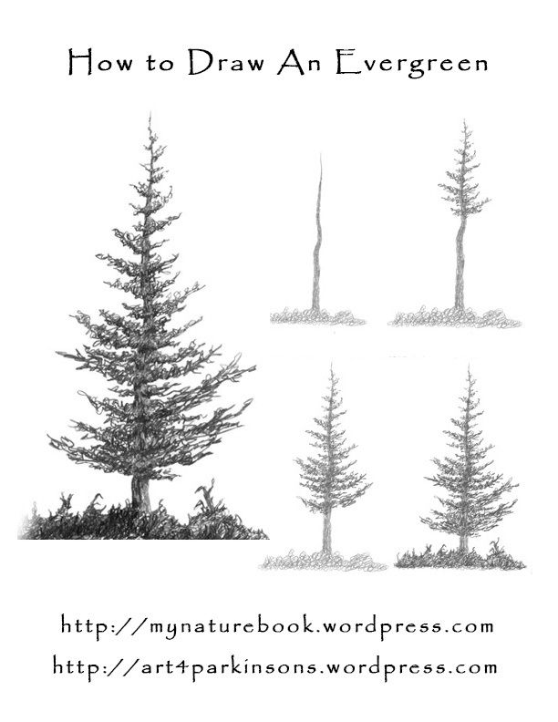 how to draw pine trees step by step how to draw realistic pine trees step by step arcmelcom how trees by step draw step pine to