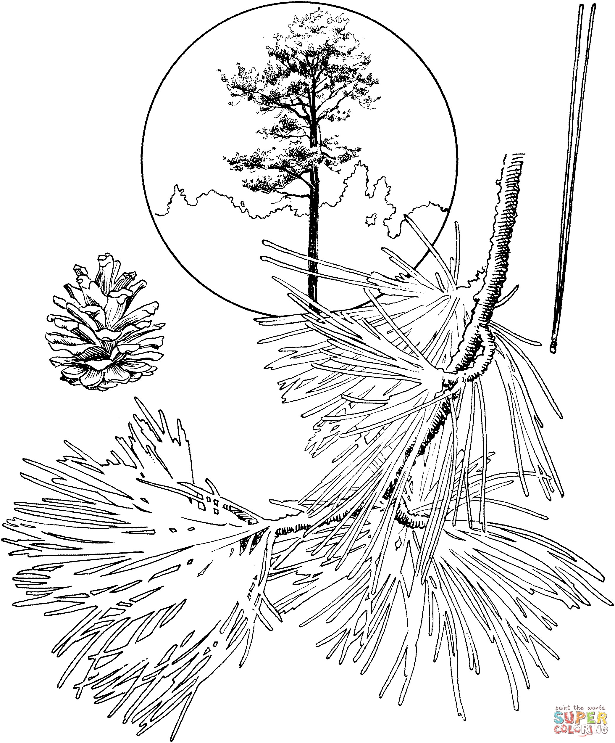 how to draw pine trees step by step simple pine tree drawing at getdrawings free download trees how pine step step draw by to