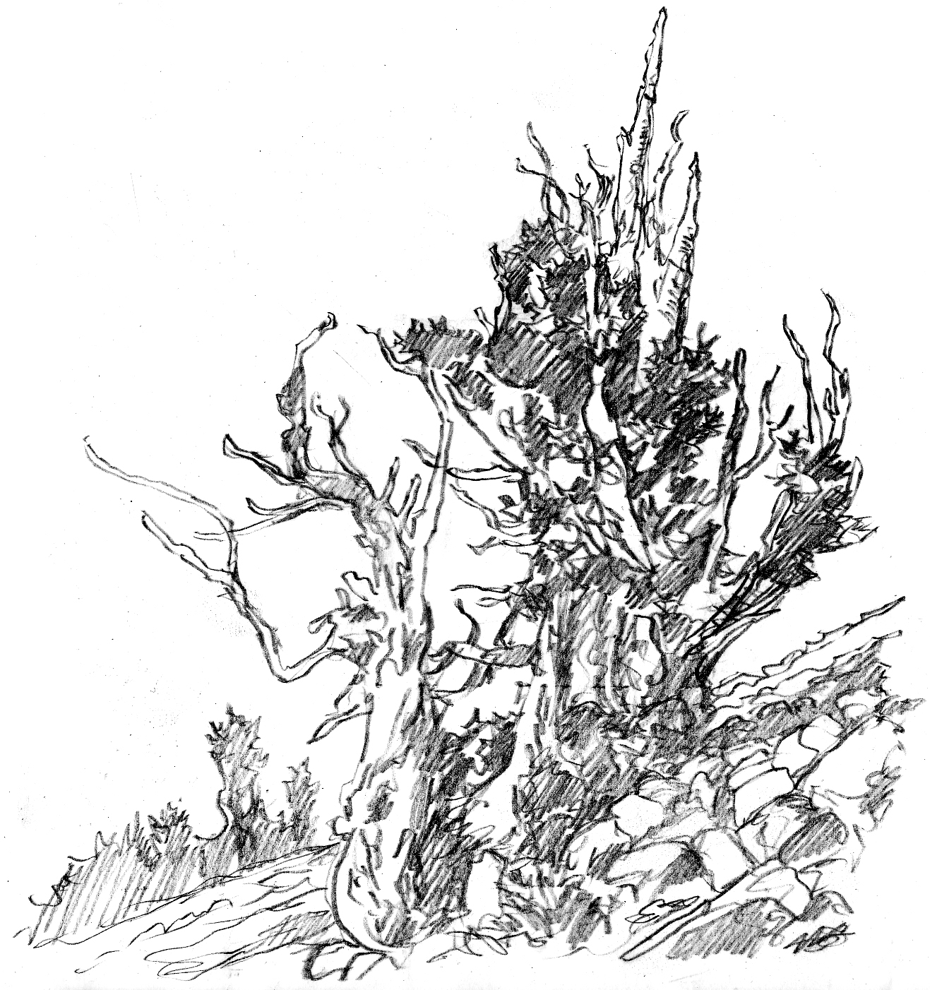 how to draw pine trees step by step tree sketch drawing at paintingvalleycom explore trees step to how pine by step draw