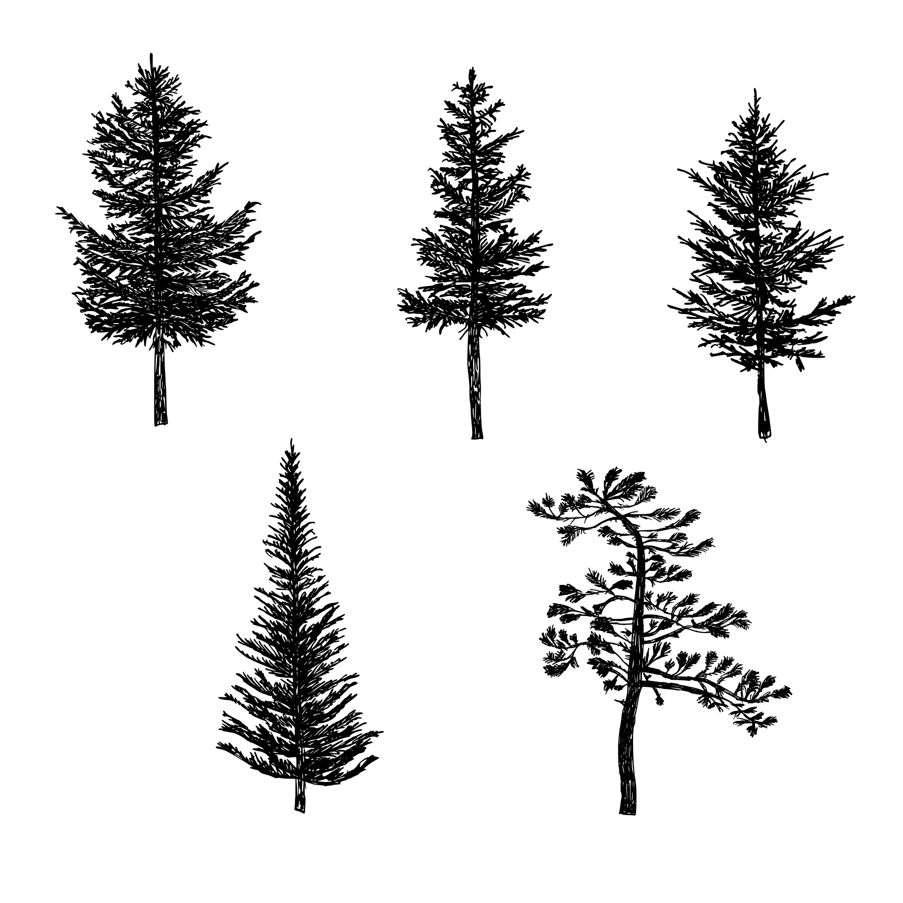 how to draw pine trees tattoo on pinterest tree drawings pine and pine tree tattoo to pine draw how trees