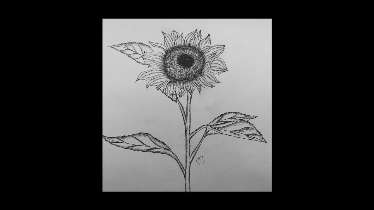 how to draw sunflower big image sunflower line drawing png transparent png draw sunflower how to
