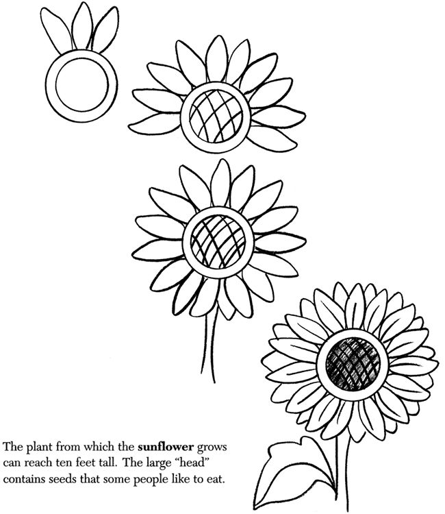 how to draw sunflower hand drawn vector artwork in pen ink style of a sunflower to how draw