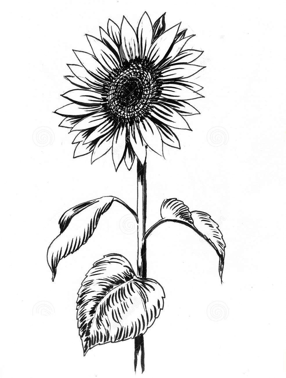 how to draw sunflower how to draw a sunflower easy step by step drawing guides to draw how sunflower