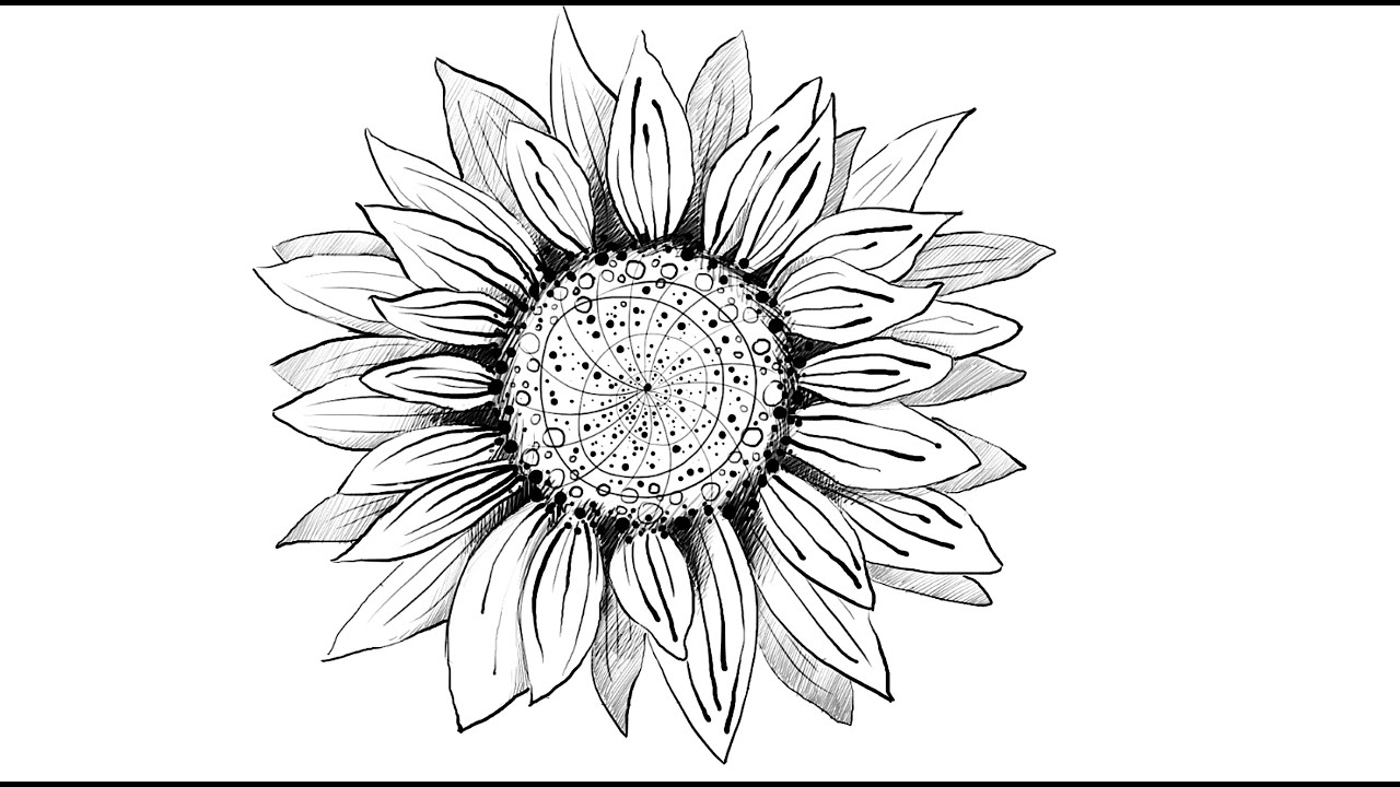 how to draw sunflower i love sunflowers this line drawing will make a joyful draw sunflower to how