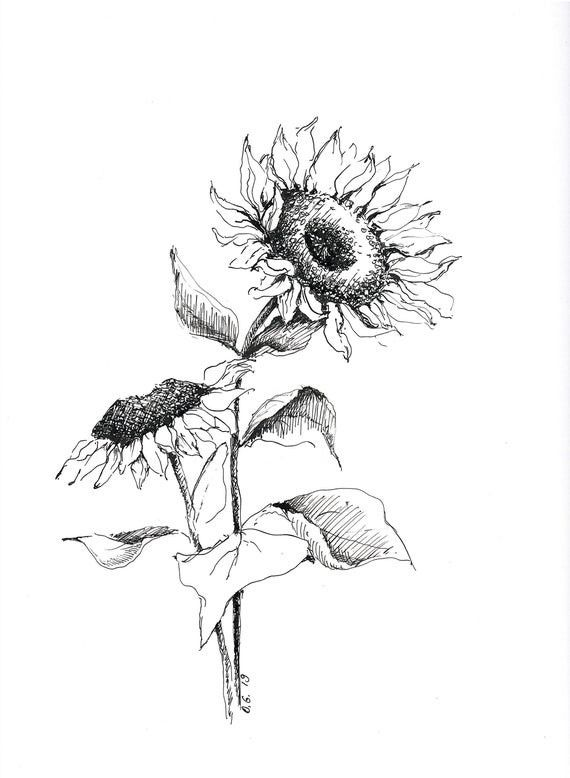 how to draw sunflower simple sunflower drawing at getdrawings free download to how sunflower draw