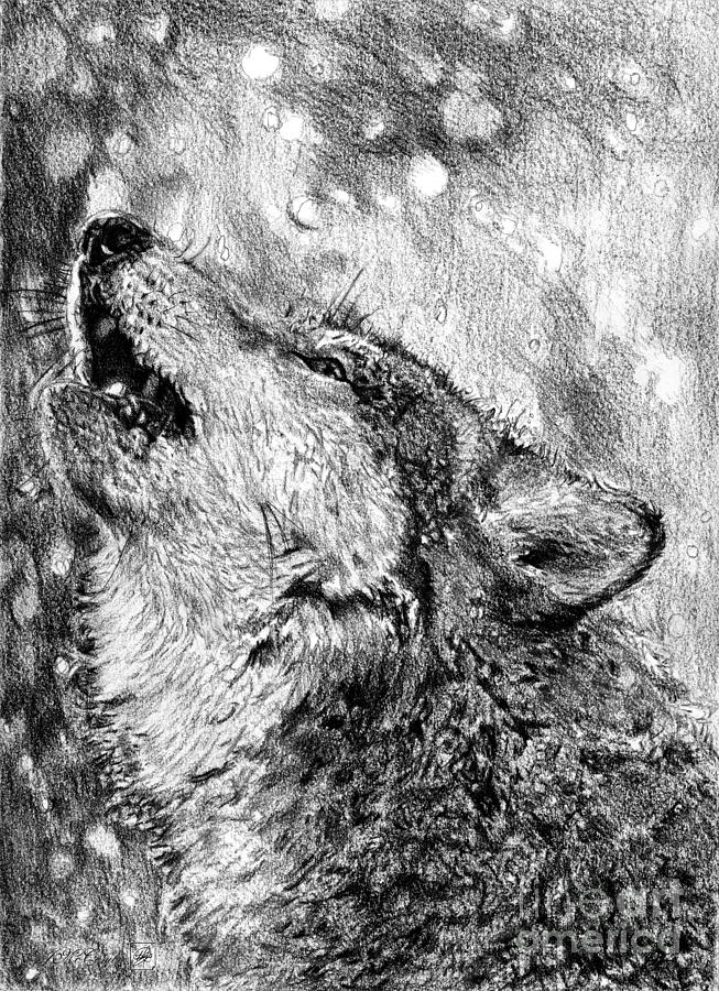howling wolf drawing howling gray wolf drawing by j mccombie howling wolf drawing