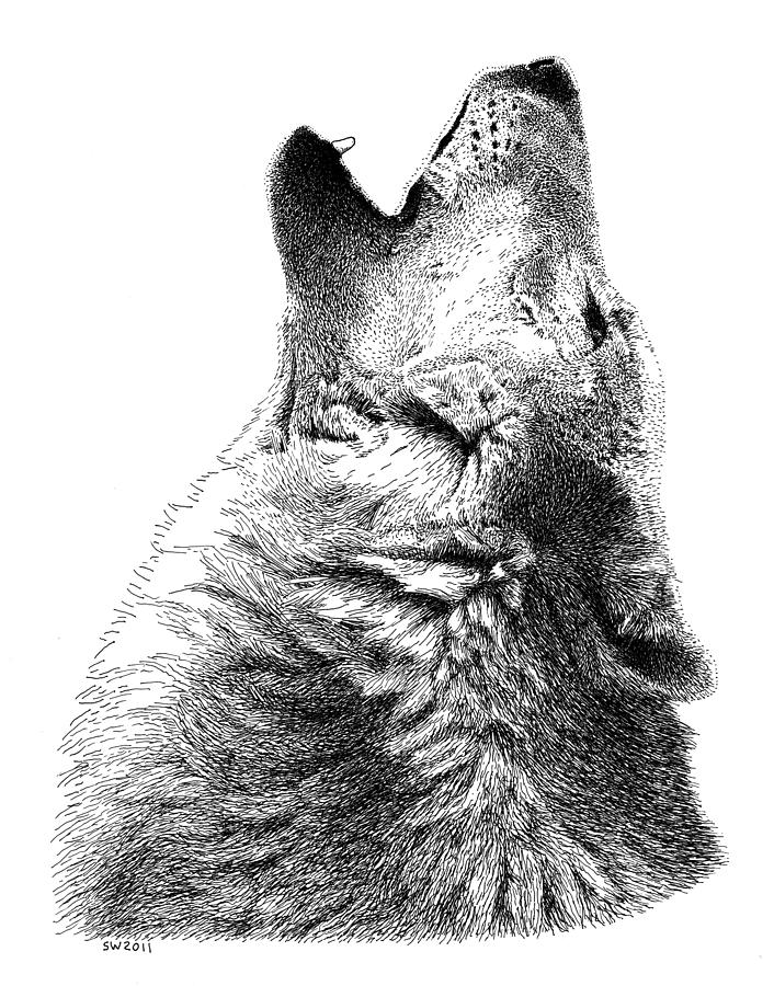 howling wolf drawing howling wolf drawing by andrew read wolf drawing howling