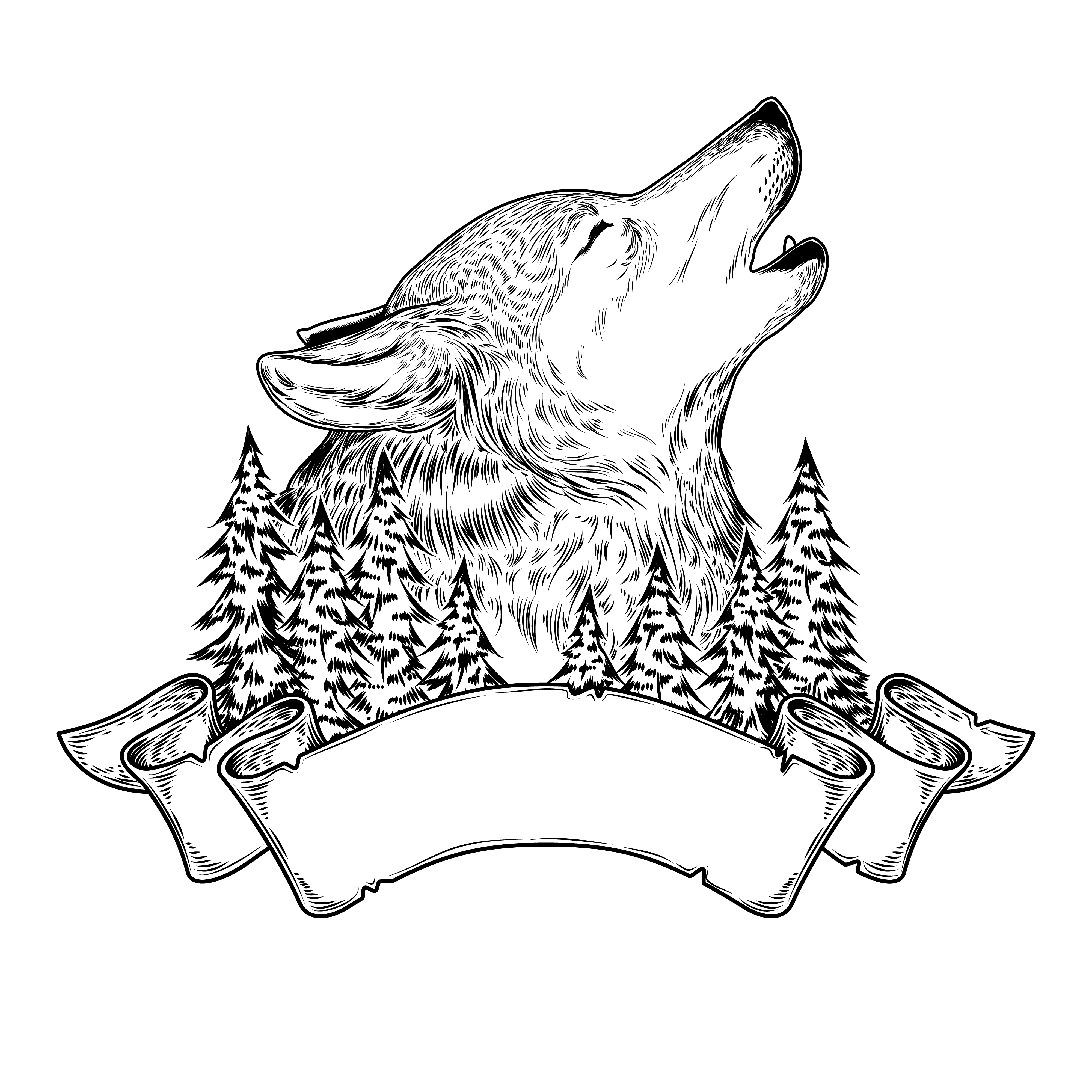 howling wolf drawing vector illustration of a howling wolf with ribbon drawing howling wolf