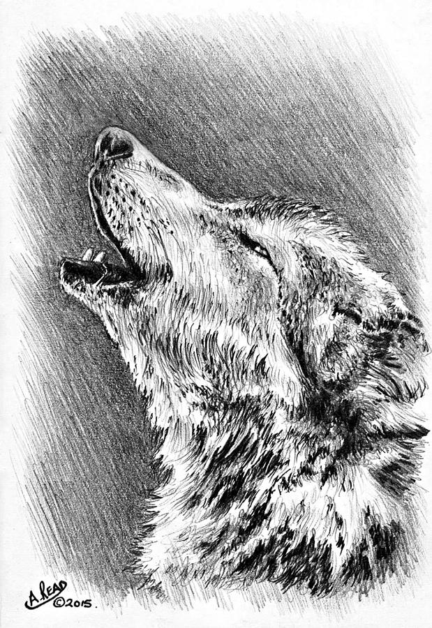 howling wolf drawing wolf howling at the moon drawing free download on clipartmag wolf howling drawing