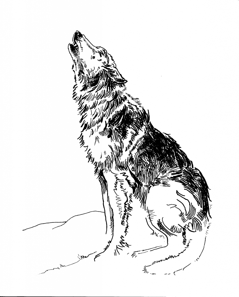 howling wolf drawing wolf howling at the moon drawing in pencil at getdrawings drawing howling wolf