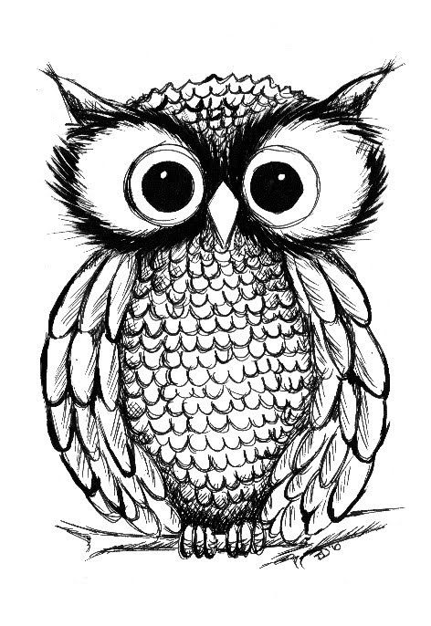 images of owls to color 73 best images about owl our wise lord on pinterest color owls of images to