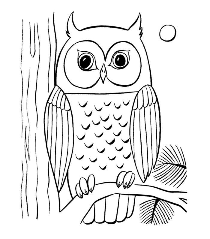 images of owls to color cartoon owl coloring pages get coloring pages images to of color owls