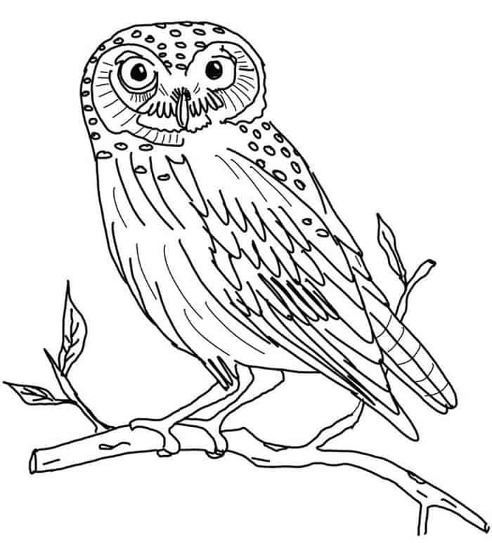 images of owls to color owl coloring pages owls to color images of