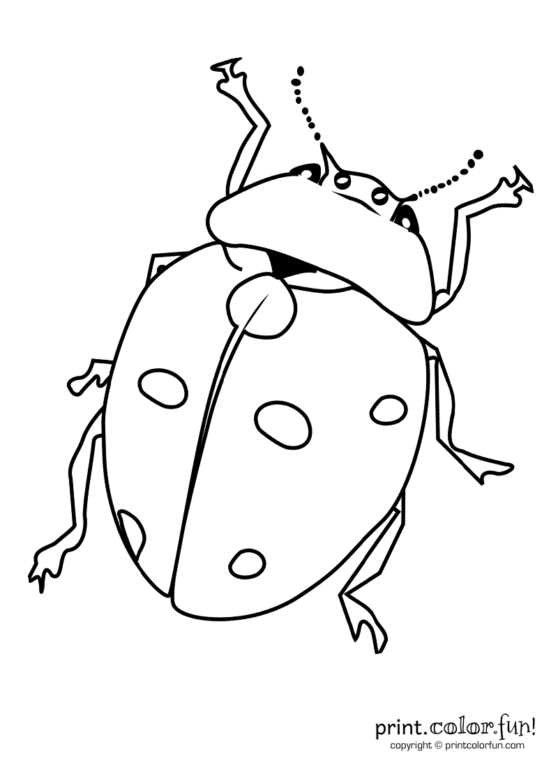 insects coloring sheets a bug coloring page print color fun coloring insects sheets