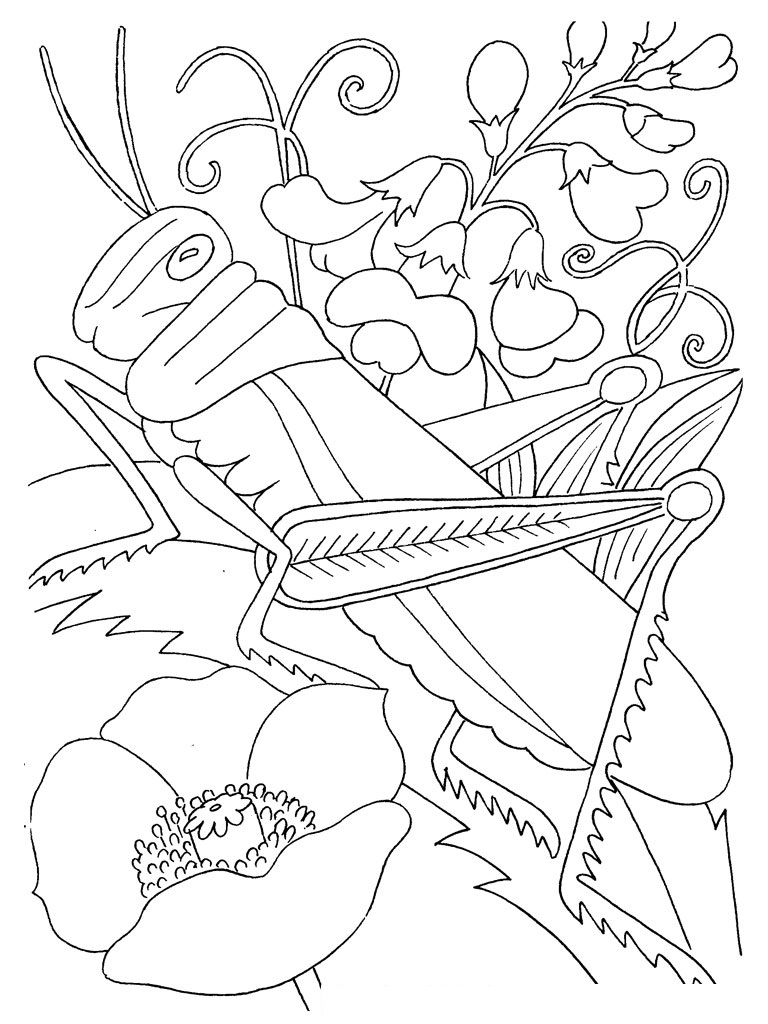 insects coloring sheets insect coloring pages to download and print for free insects coloring sheets