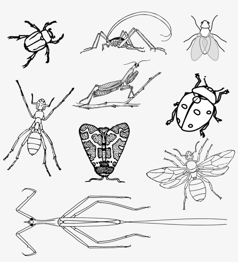 insects coloring sheets insects bugs beetle realistic bugs coloring page insects coloring sheets