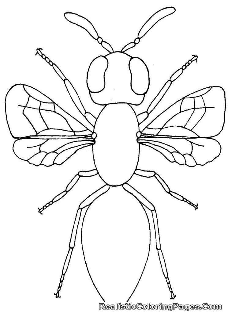 insects coloring sheets realistic insect coloring pages realistic coloring pages coloring insects sheets 1 1