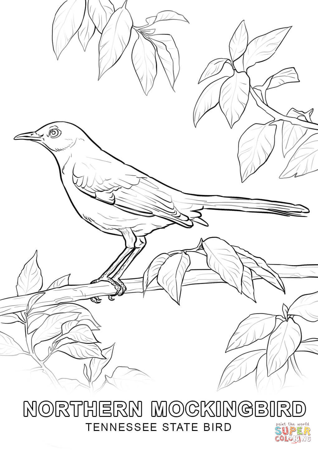 iowa state bird 30 baltimore orioles coloring pages free printable iowa state bird