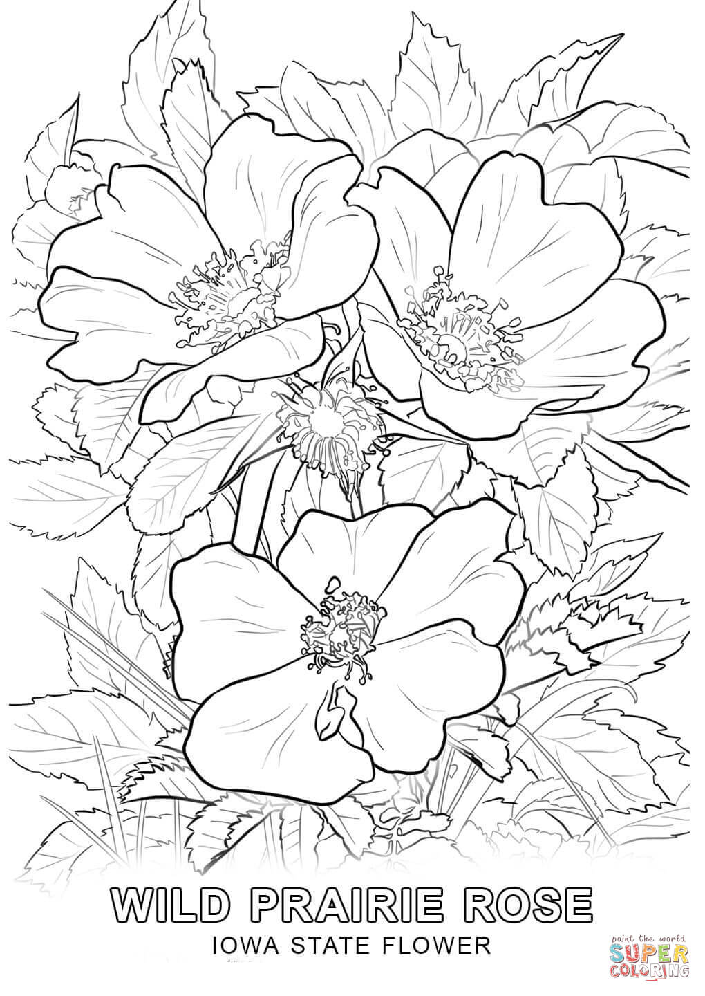 iowa state bird birds and flowers coloring pages pictures imagixs iowa state bird