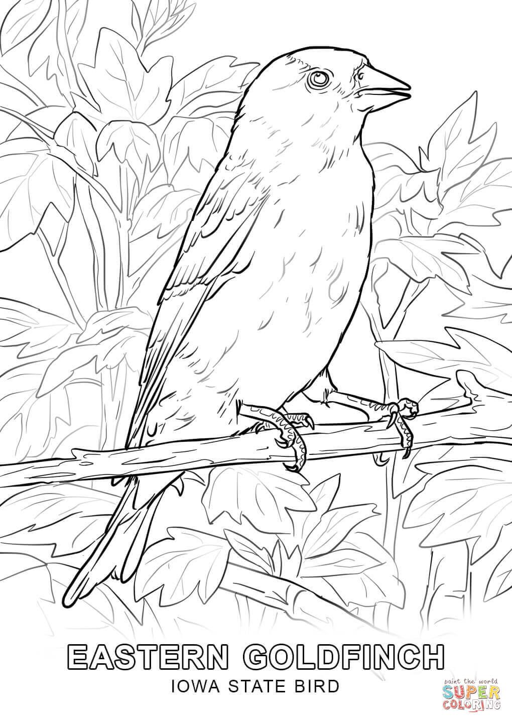 iowa state bird eastern goldfinch coloring page state bird iowa