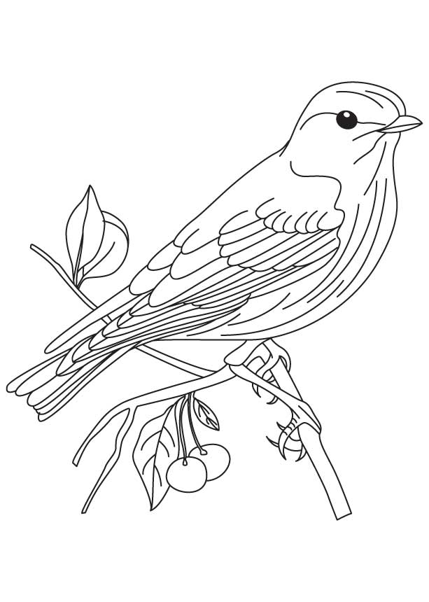 iowa state bird massachusetts state bird coloring page free printable iowa bird state