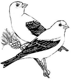 iowa state bird north carolina state bird coloring page coloring page blog state iowa bird
