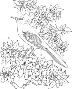 iowa state bird state flower coloring pages iowa state flower coloring bird state iowa