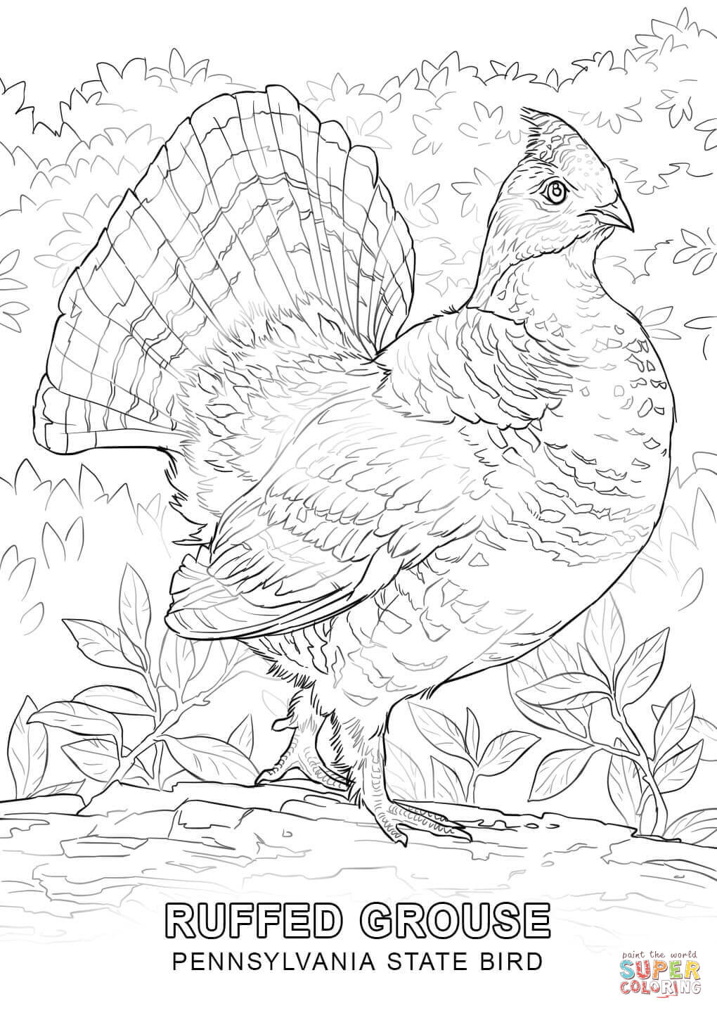 iowa state bird wyoming state bird coloring page free printable coloring bird state iowa
