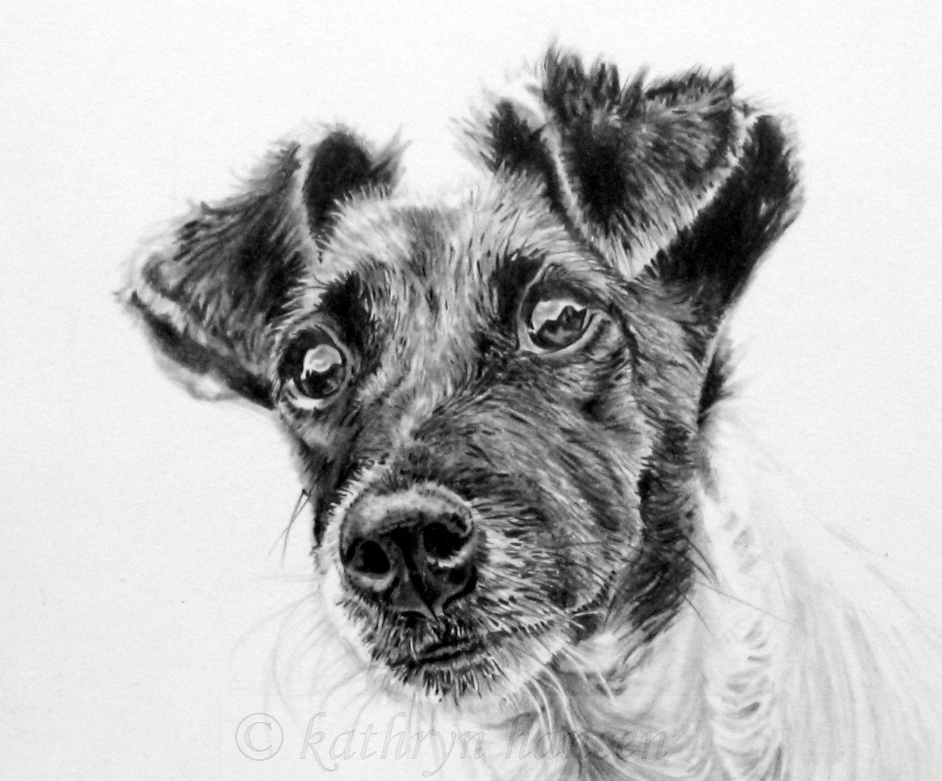 jack russell drawings amazoncom jack russell art jrt wall art print jack russell jack drawings